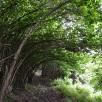 Caminem admirant l'esplendor de la natura