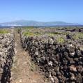 14 Vinyes de EL PICO Detall6 Illa FAIAL al fons
