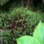 Molsa (de 400 varietats)2 33 de 45