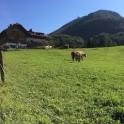 01 Prat bucòlic pujant al Gaisberg