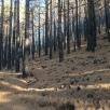 02 Estralls del foc de fa 6 mesos (Foto A. Torras)