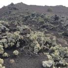 09 Liquens primers colonitzadors de zona volcanica (foto A. Torras)