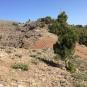 10 Trobem els primers pins valents (Foto A. Torras)