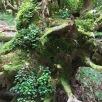 11 Jardí vertica en un tronc de faig