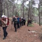 Pinus halepensis PI BLANC pino carrasco 01