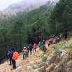 Pinus pinaster PINO RESINERO Pinastre 05